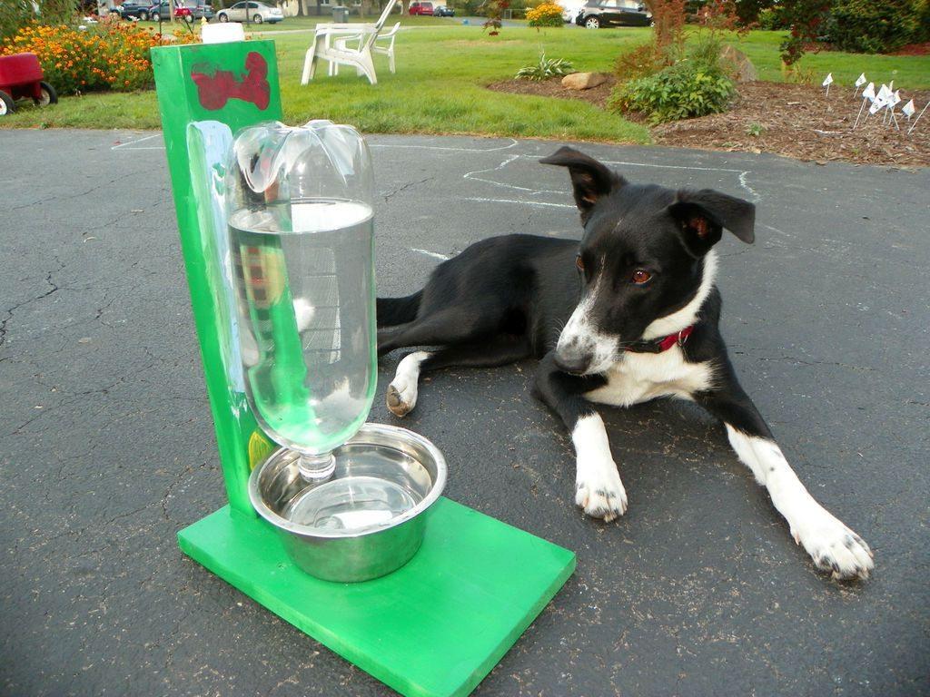 Como hacer un bebedero para perros y gatos todo manualidades for Construir piscina para perros